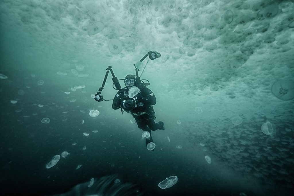A diver swims through plume of moon jellyfish