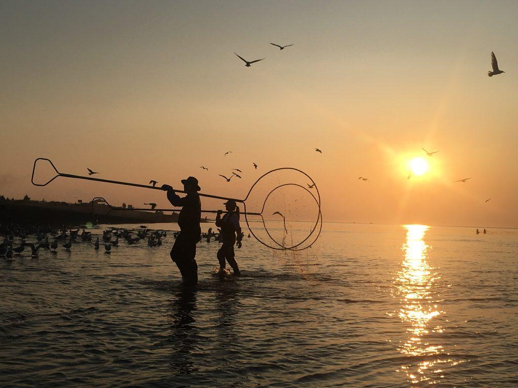 Dipnetters on Kasilof River wade toward shore at sunset birds fly overhead