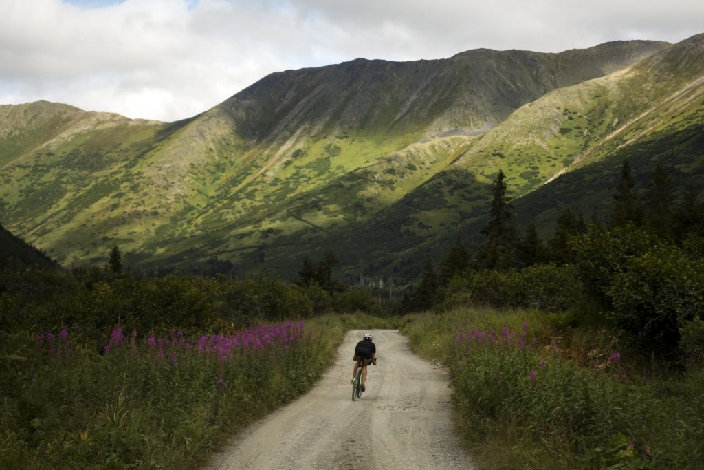 Lael Wilcox cycles down gravel road beside fireweed with mountains in backgrounds