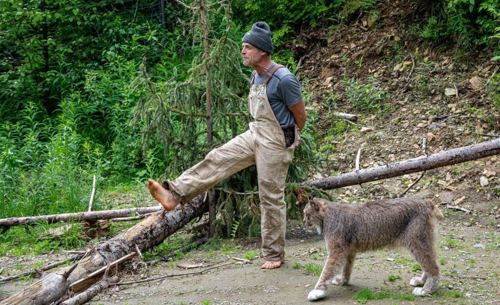 Man in Carhartt overalls and knit hat puts his foot up on a downed tree while a lynx walks up behind