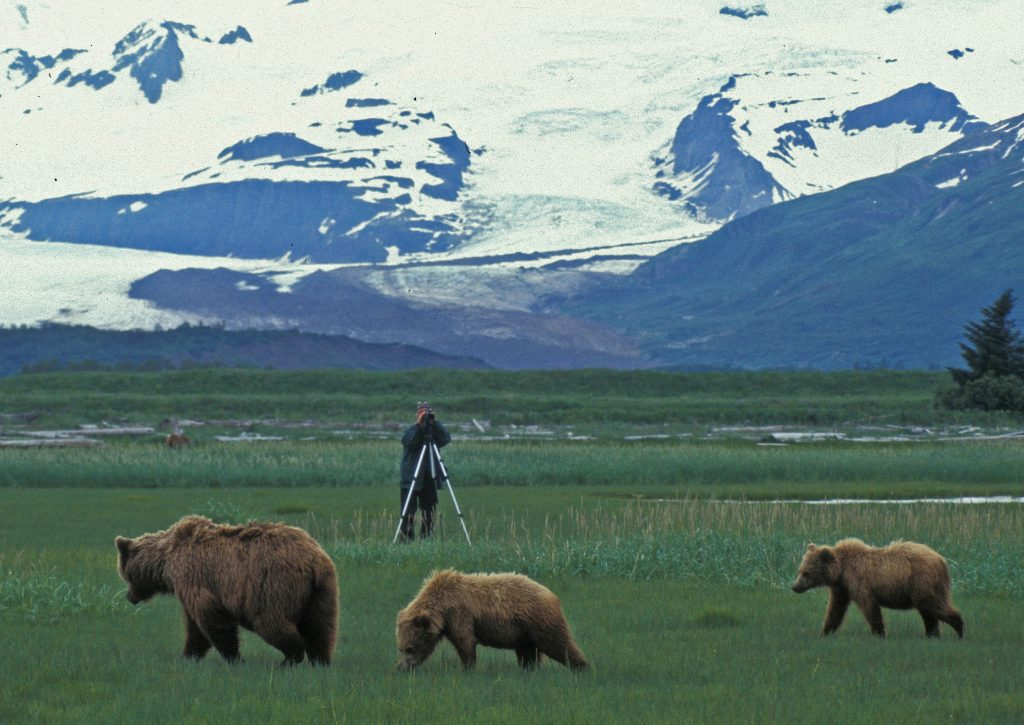 Timothy Treadwell in a field videotaping a sow grizzly bear and two cubs. Mountains behind.