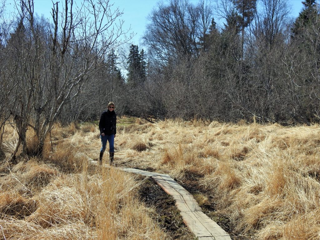 Susan Pope on boardwalk in marsh along Calvin and Coyle Trail
