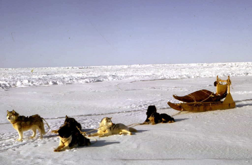 sled dogs harnessed to a sled lying on a landscape of snow and ice