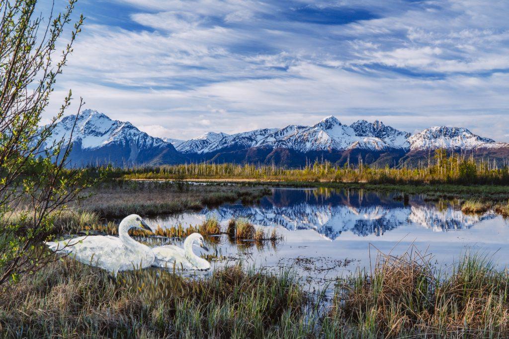Pioneer Peak, Twin Peaks and swans