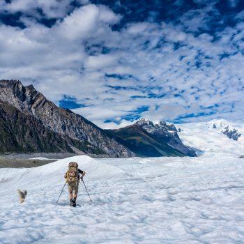 Husky's love Glaciers