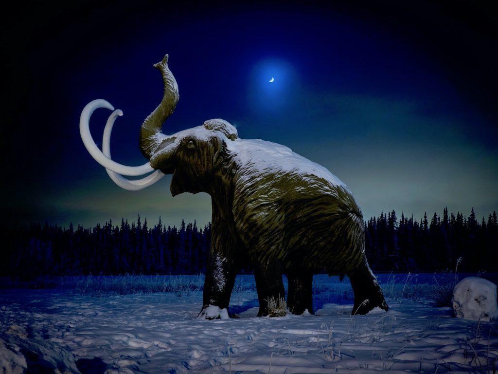 A woolly mammoth statue at night at Yurkon Beringia Interpretive Centre