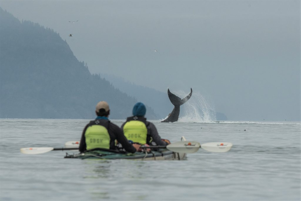 Kayakers watch a humpback whale tail slap