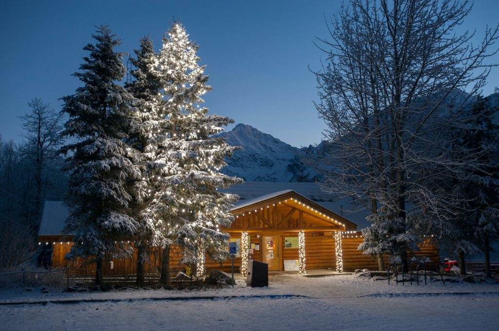 White holiday lights on a log building and spruce tree in night winter scene
