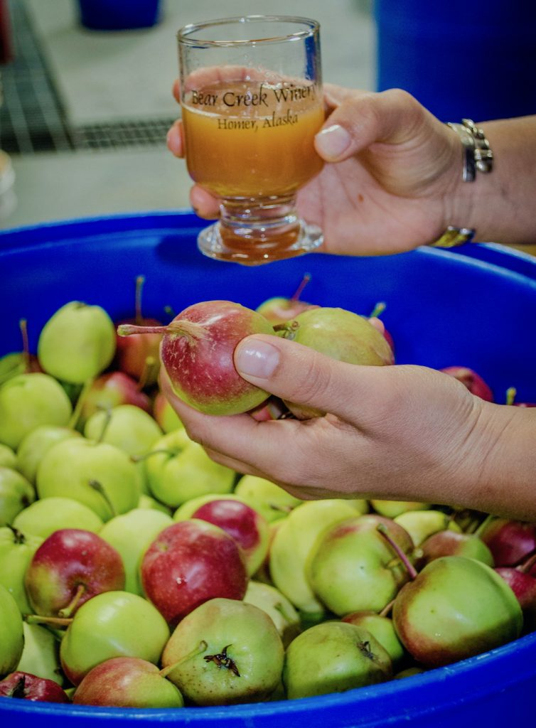 A glass of wine from bear breek winery held over a tub of apples