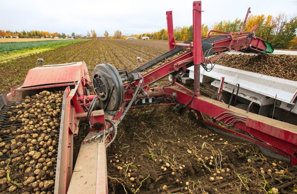Front end of a piece of farm equipment as it moves over a potato field