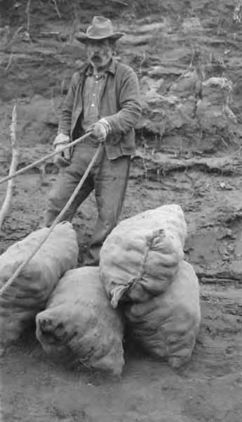 Black and white photo of a man hauling big sacks of potatoes